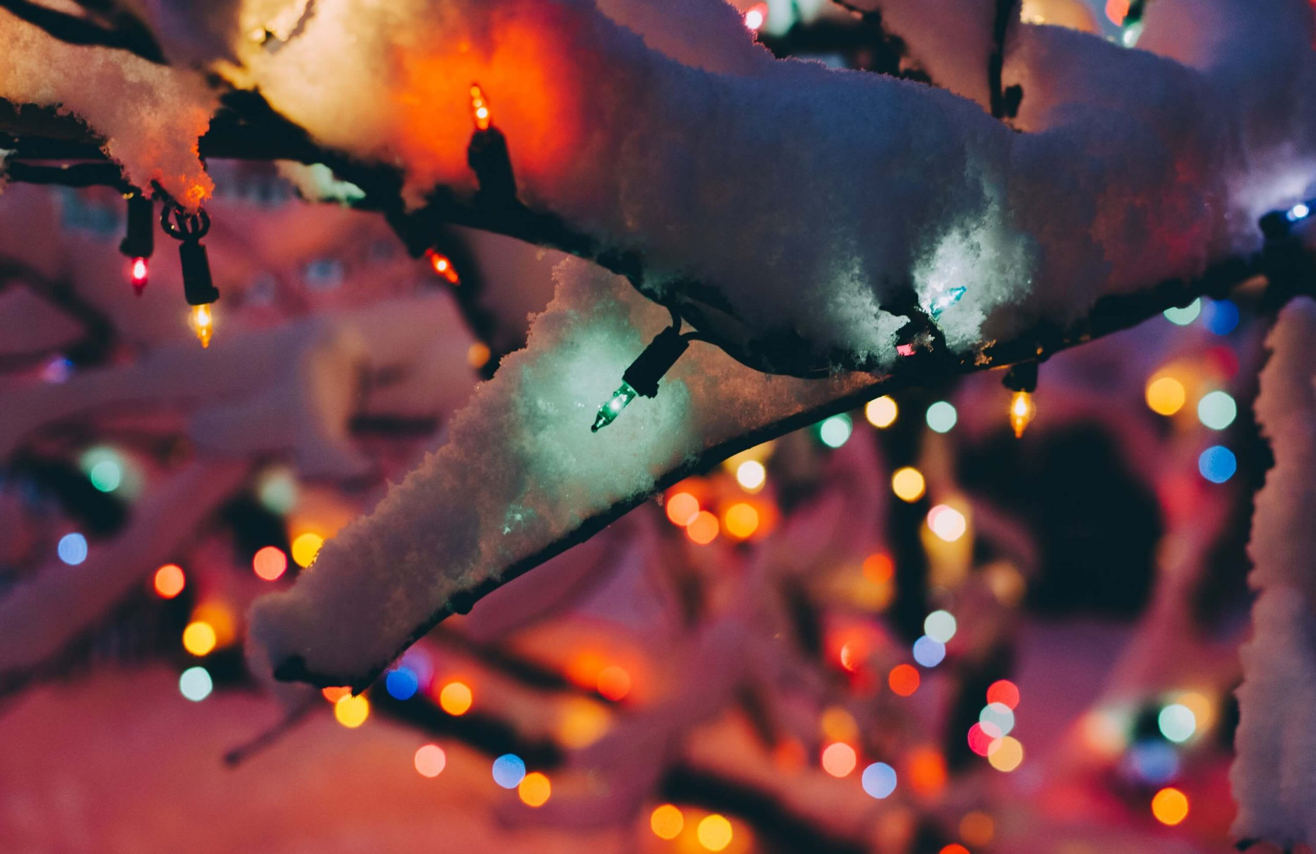 Pretty Christmas lights on some dark branches|www.parentinghighschoolers.com